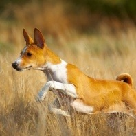 protecting-dogs-from-grass-seeds