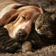 the-importance-worming-your-pets
