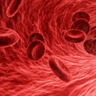 blood-cells-blood-testing-for-dogs