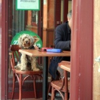dogs-enjoying-time-with-owners-in-pet-friendly-cafes