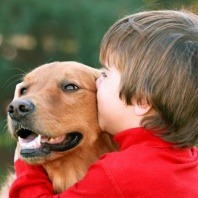 golden-retriever-with-boy