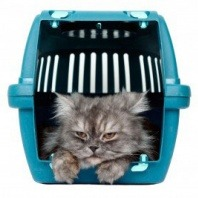 cat on the cage