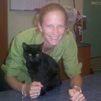 samson-a-black-male-five-month-old-stray-cat