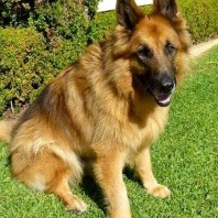 kaiser-after-having-a-basketball-sized-mass-surgically-removed