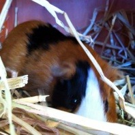 Napoleon having fun in the hay