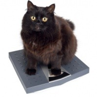 black-cat-sitting-on-scales