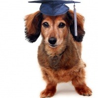 vetwest-puppy-preschool-pup-wearing-a-graduation-cap