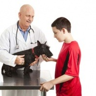taking-your-pet-dog-to-the-vet
