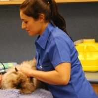 a-female-veterinary-nurse-from-vetwest