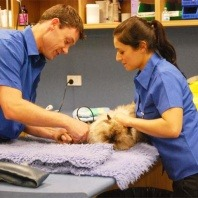 vetwest-nurses-performing-checkup-on-a-cat